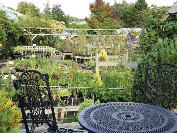 Image of The Garden Tea Room at Brackenwood