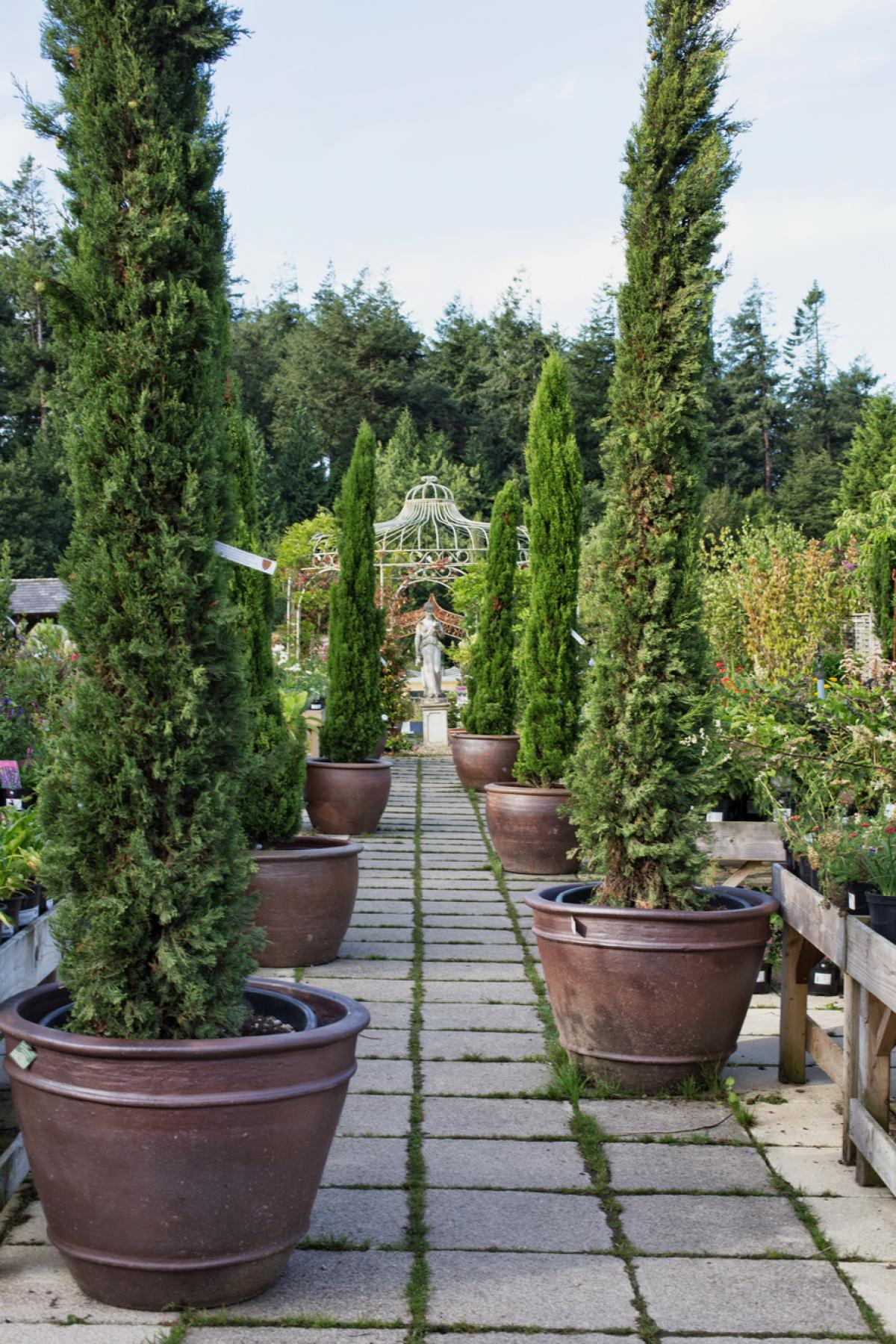 Images from Duchy of Cornwall Nursery