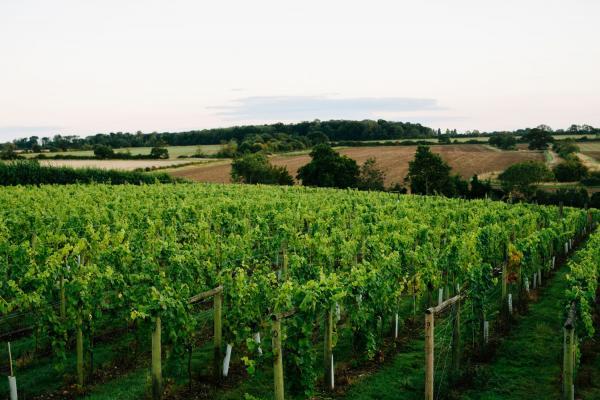 Image of Wyken Vineyards