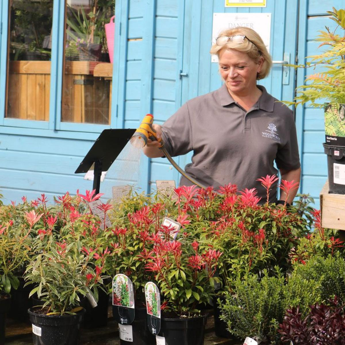 Images from The Woodworks Garden Centre