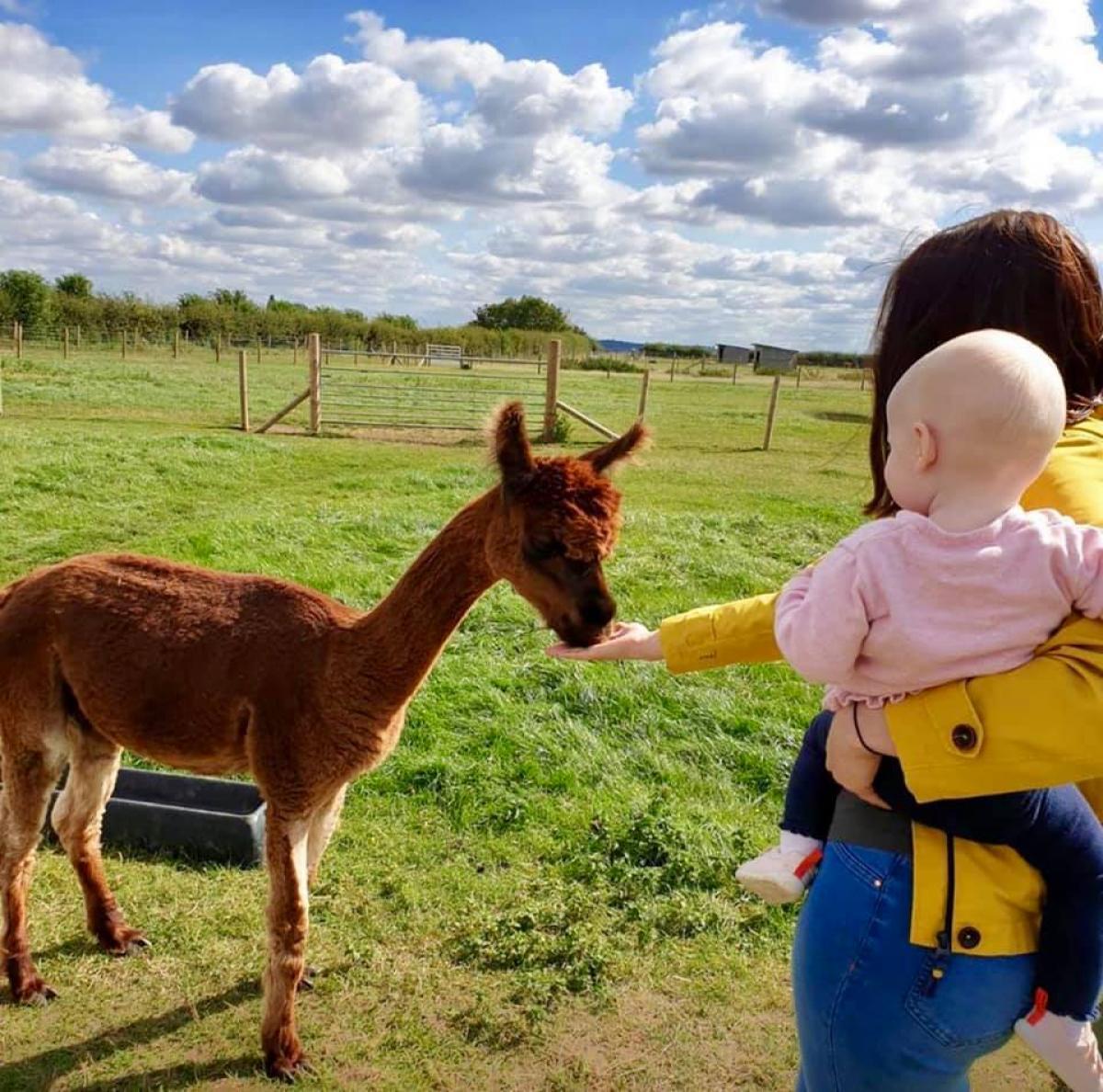 Images from JandJ Alpacas